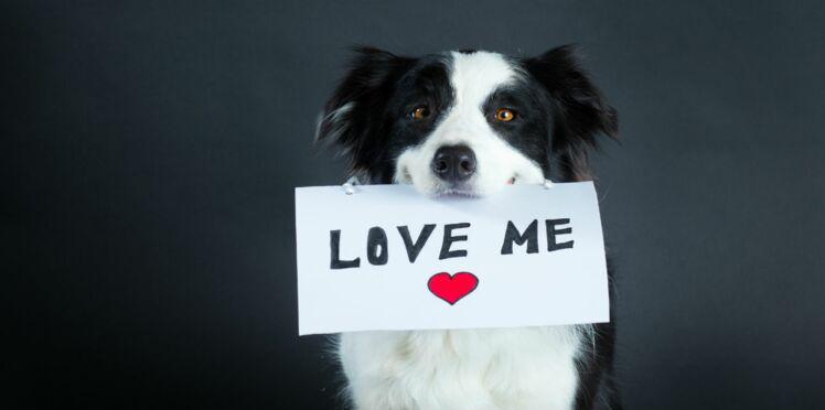 Agissons en faveur de l'adoption !
