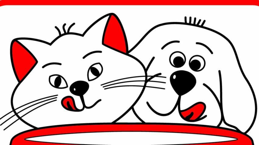 Aidons les chats des refuges