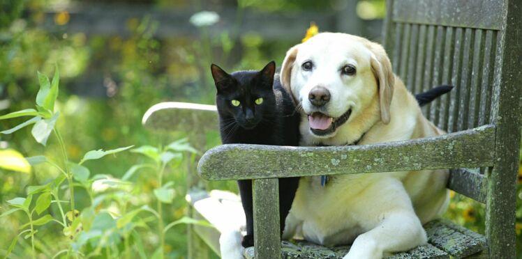 Animaliste, un parti défenseur des animaux