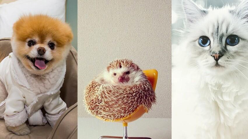 10 animaux stars à suivre (absolument) sur la toile !