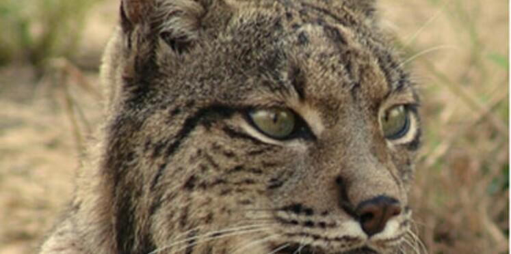 Une espèce animale sur quatre en danger