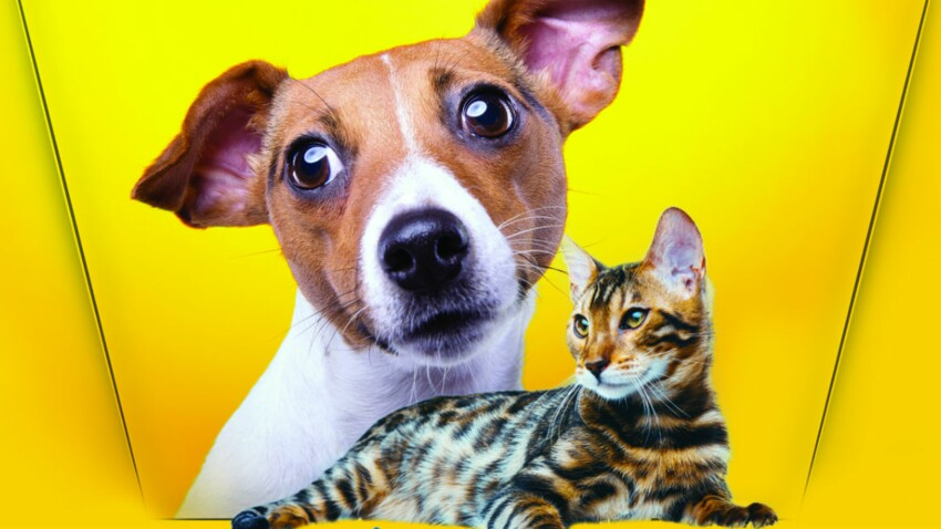 Avoir un animal, ça fait du bien à tous !
