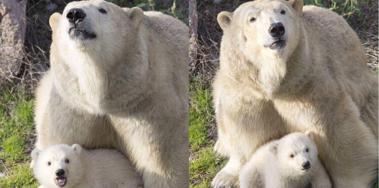 Bébé ours est sorti de sa tanière !