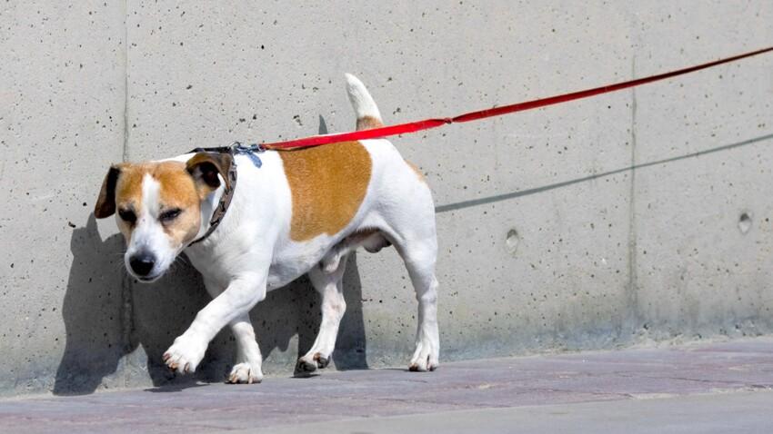 SPA : les adoptions de chiens et chats en baisse