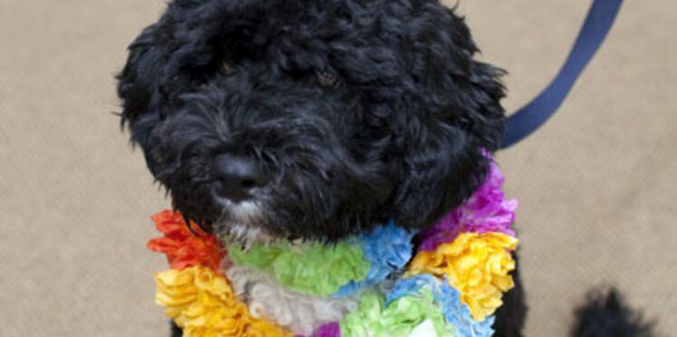 Bo : le nouveau chien des Obama