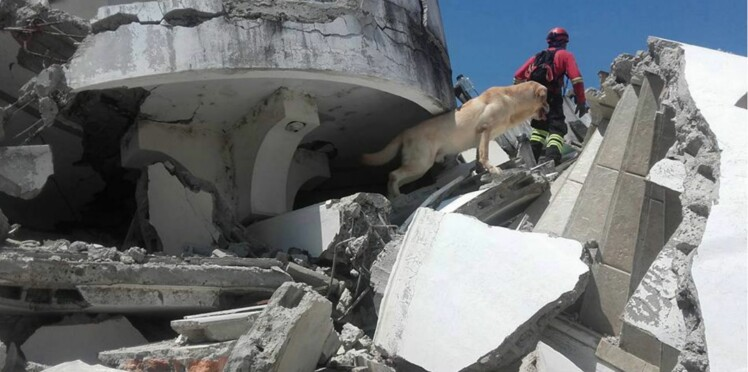 Bravo Dayko, le chien héros