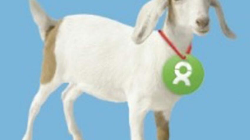 Pour Noël, pourquoi pas offrir une ruche ou une chèvre avec Oxfam ?