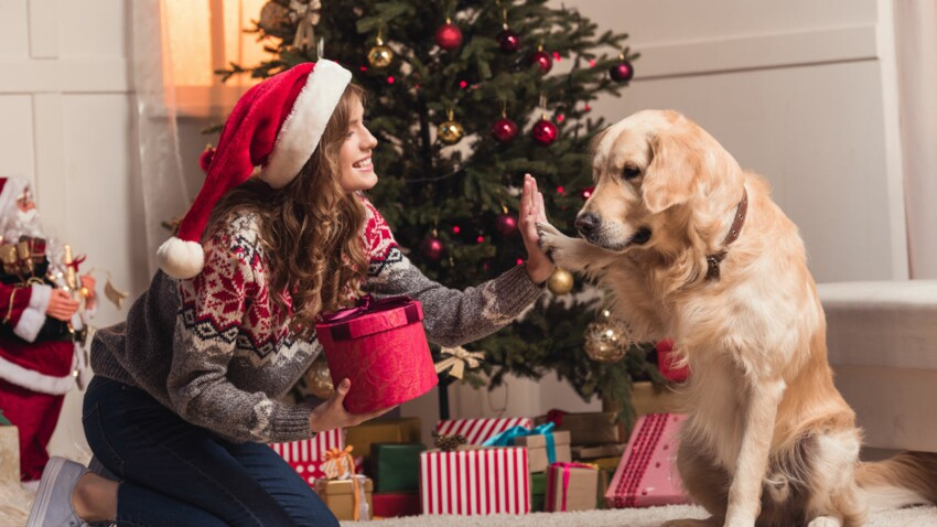 Cadeaux de dernière minute pour les amoureux des animaux