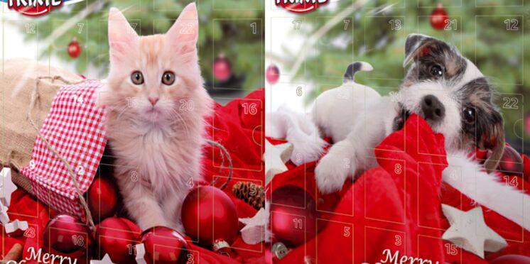Un calendrier de l'Avent pour les chiens et les chats