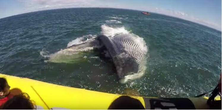 Vidéo : une immense baleine se rue sur un bateau de touristes