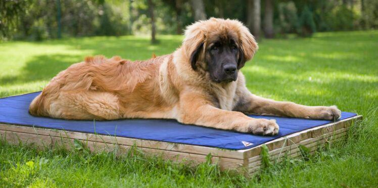 Canicule : des accessoires anti-chaleur pour nos chiens