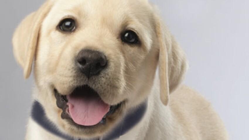 Ce chien porte l'odeur de sa mère autour du cou
