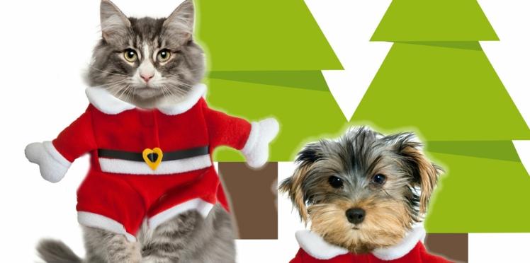 Chien et chat en Père Noël