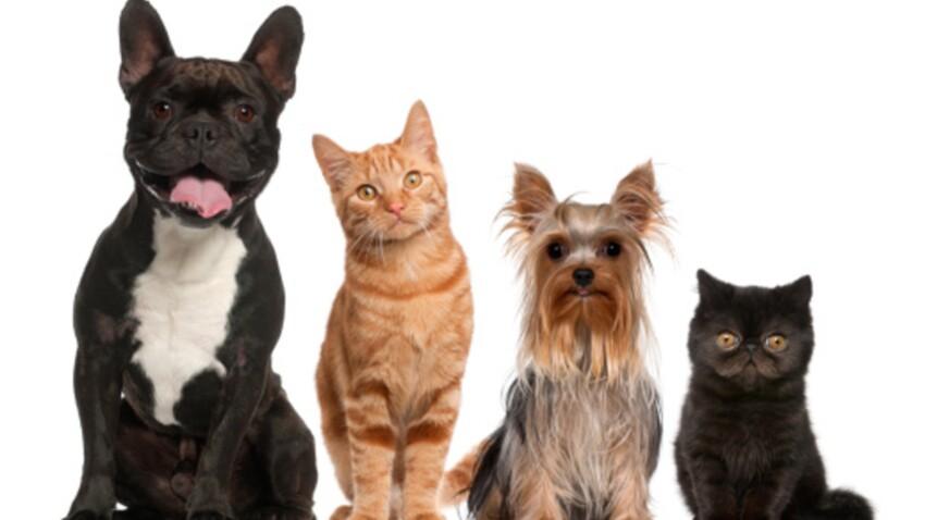 Chien ou chat : quand la maturité les concerne