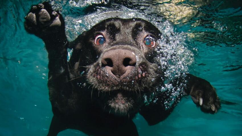Quand les chiens s'éclatent sous l'eau, quel spectacle !