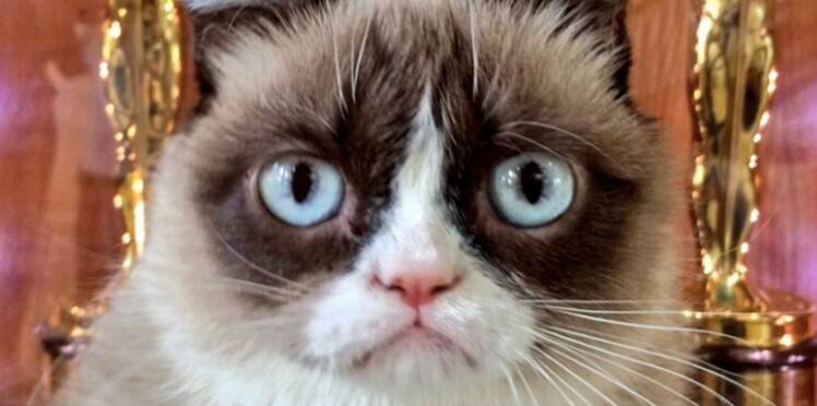 Buzz : le top 50 des chats les plus influents !