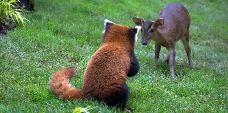 Colocation animalière réussie au parc zoologique de Mulhouse