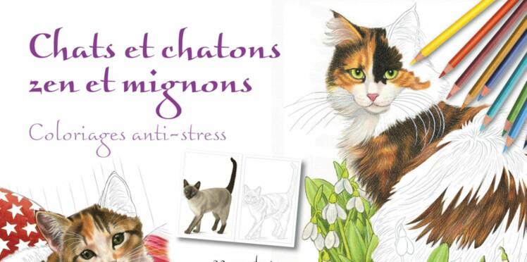 Coloriez des chats, vous chasserez le stress !