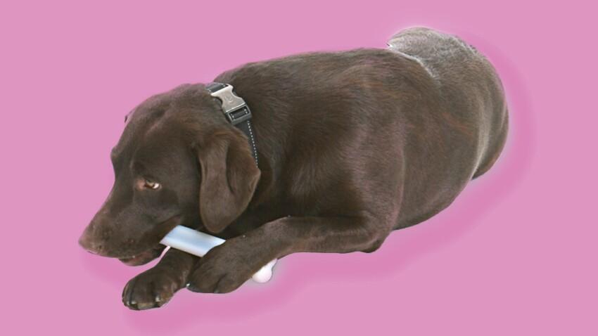 Comment occuper son chien en lui faisant du bien