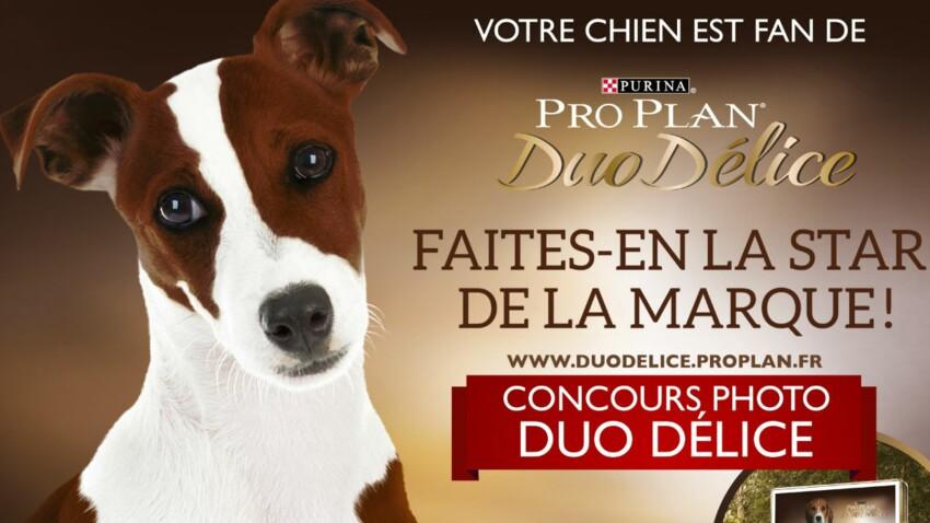Gagnez une campagne d'affichage pour votre chien !