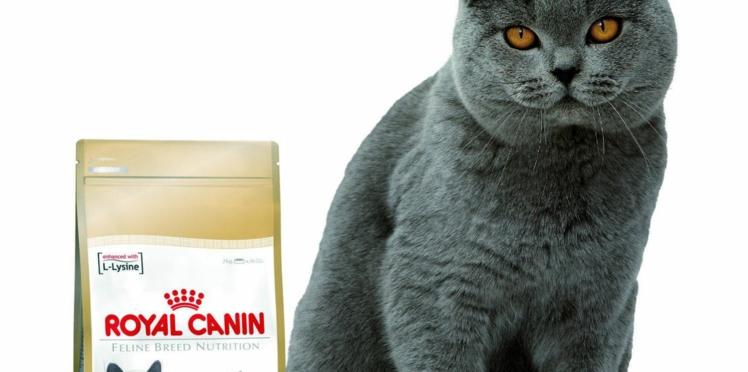 Nouveaux menus pour chiens et chats de race