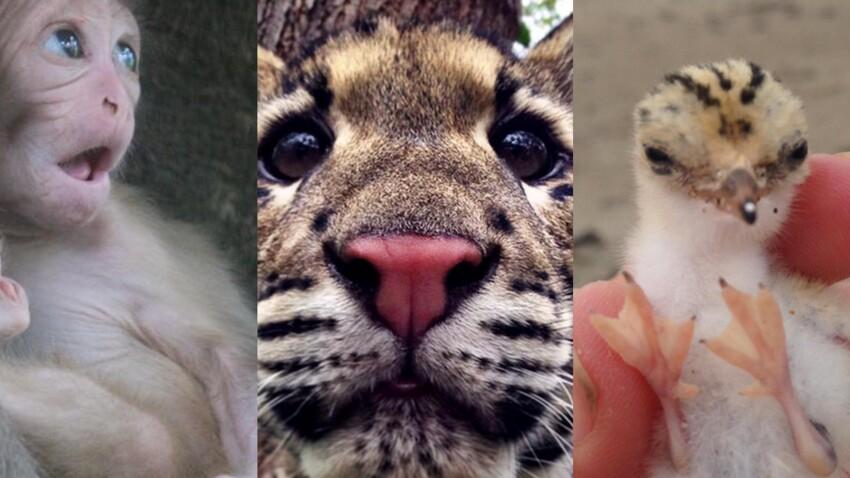 #Cuteoff : le hashtag des animaux rares et (très) mignons