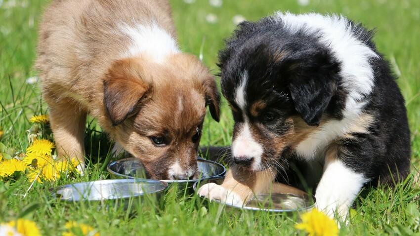 De l'eau à volonté pour nos animaux de compagnie