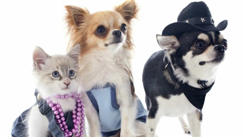 Dépensez deux fois moins pour vos chats et chiens !