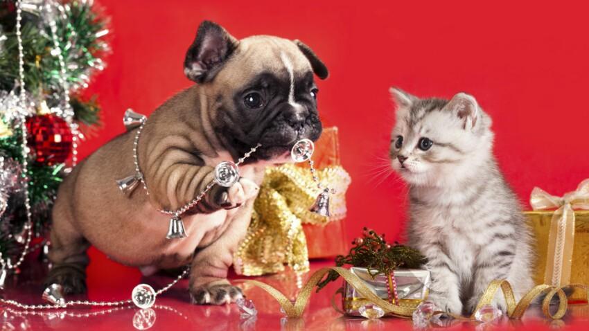 Des cadeaux à gagner pour vos animaux avec Animal Futé