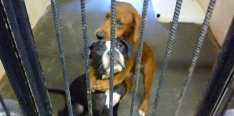 Deux chiens échappent à l'euthanasie grâce à une photo postée sur Facebook
