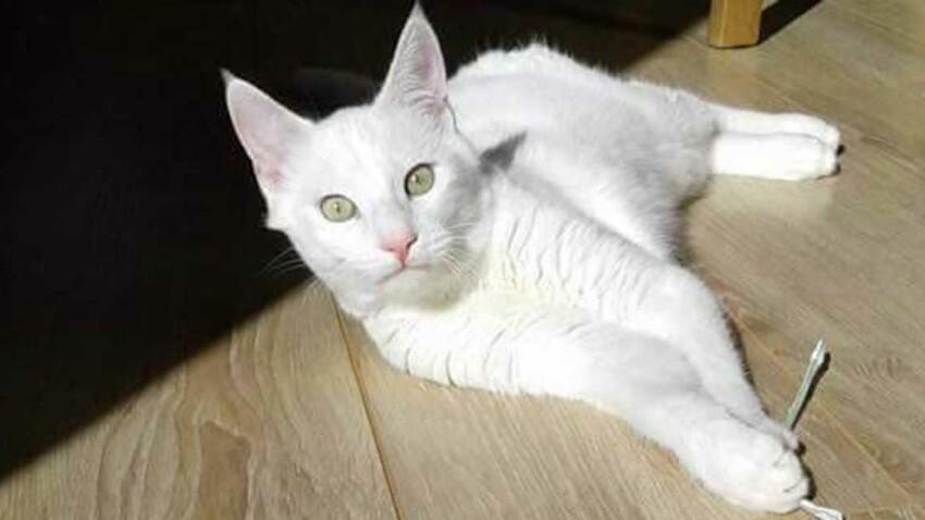 Disparu en Corse, leur chat est retrouvé… en Bretagne !