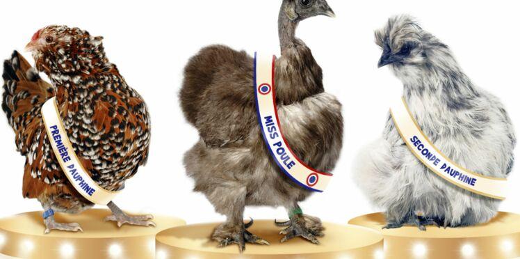 Elisez la plus belle poule de France !