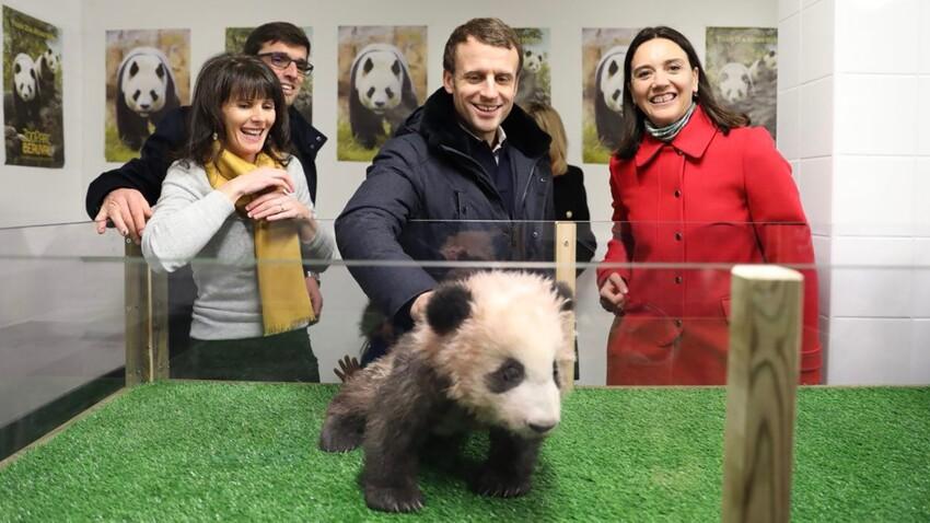 Emmanuel Macron a rencontré le bébé panda de Beauval