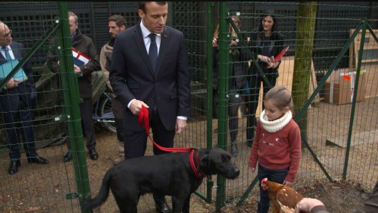 Emmanuel Macron adopte deux poules à l'Elysée, et Nemo n'en revient pas