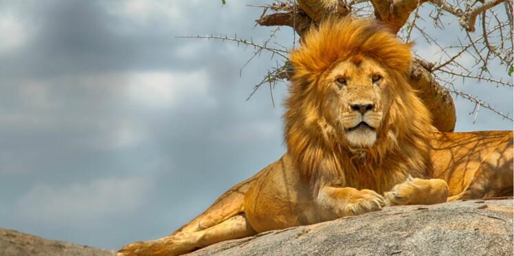 Extinction des espèces animales, il est urgent de réagir
