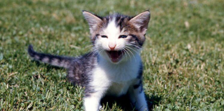 Faut-il faire stériliser les chats ?