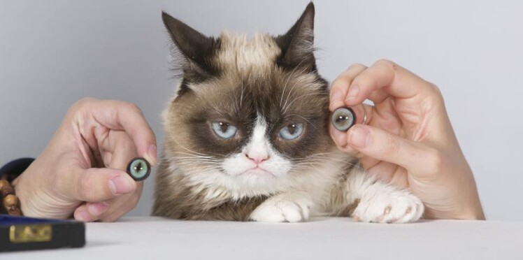 Grumpy Cat entre chez Madame Tussauds