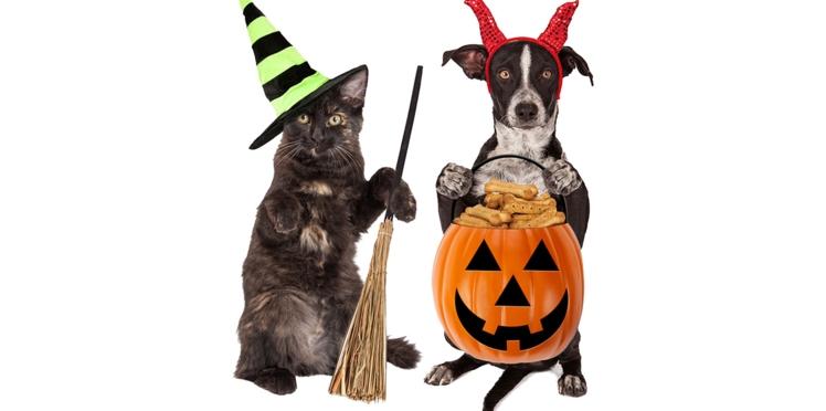Halloween : les super costumes de chiens et chats repérés sur internet
