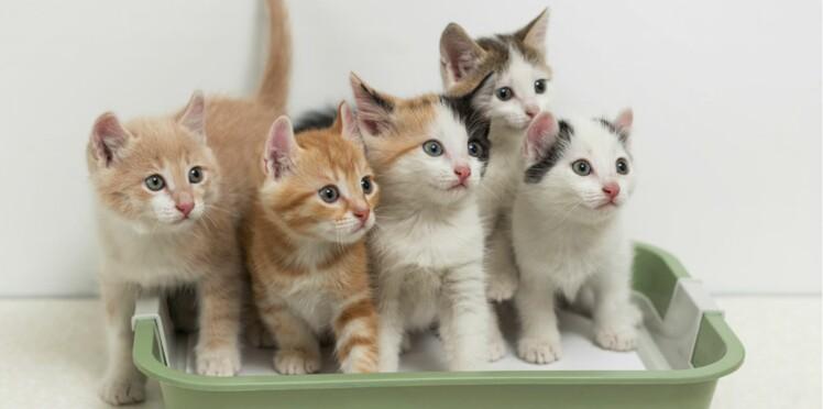 J'ai testé la nouvelle litière pour chat de chez Carrefour