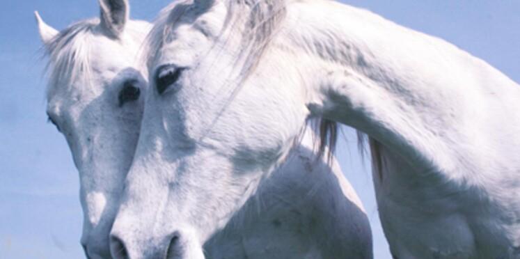 La Journée du Cheval se déroulera en septembre