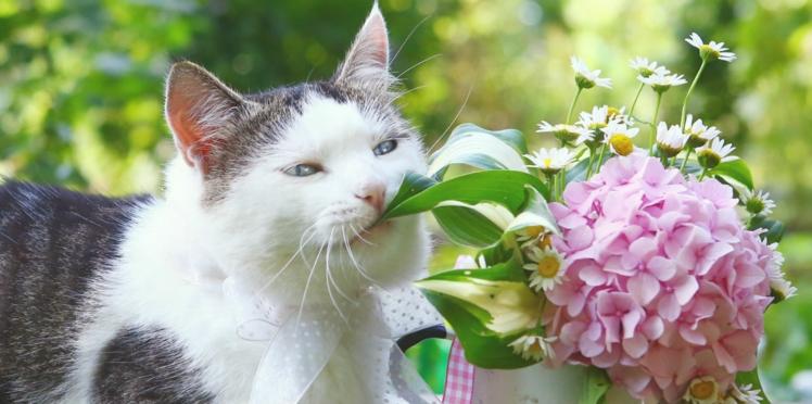 """Journée internationale du chat : 21% de leurs propriétaires les considèrent comme leur """"premier enfant"""""""