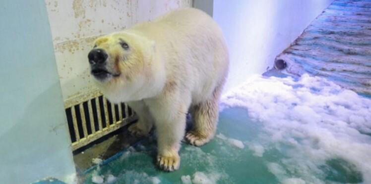 L'ours le plus triste du monde quitte sa prison