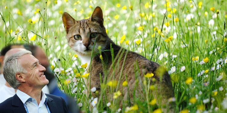 La chatte à Deschamps : pourquoi un tel phénomène ?