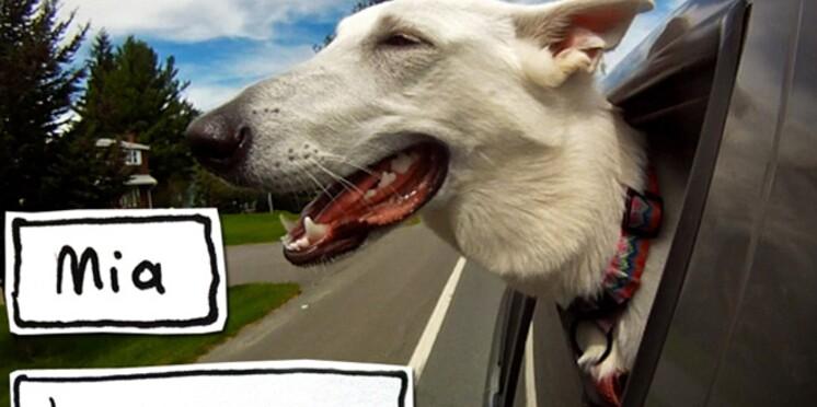 """Buzz : la vidéo """"Dogs in car"""""""