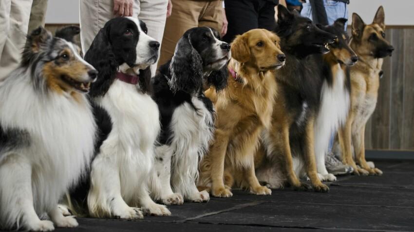 La ville de Metz organise le championnat de France des chiens de race