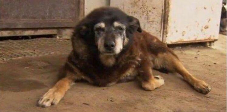 Le chien le plus vieux du monde s'est éteint à l'âge de 30 ans