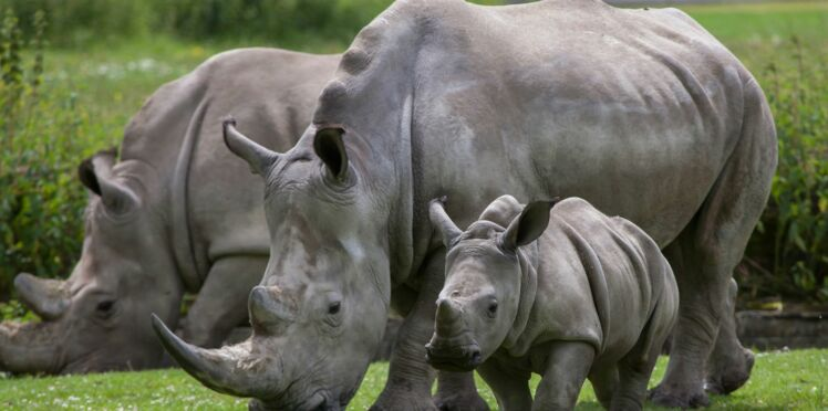 Le Parc Zoologique de Paris propose des ateliers sur les animaux