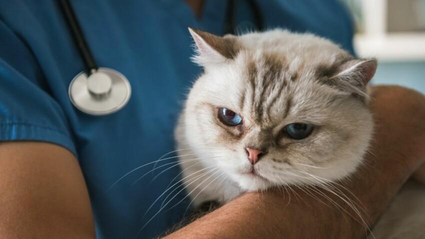 Le typhus du chat est en recrudescence !