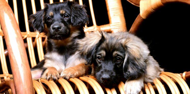 Les chiens à l'honneur au Salon de l'Agriculture