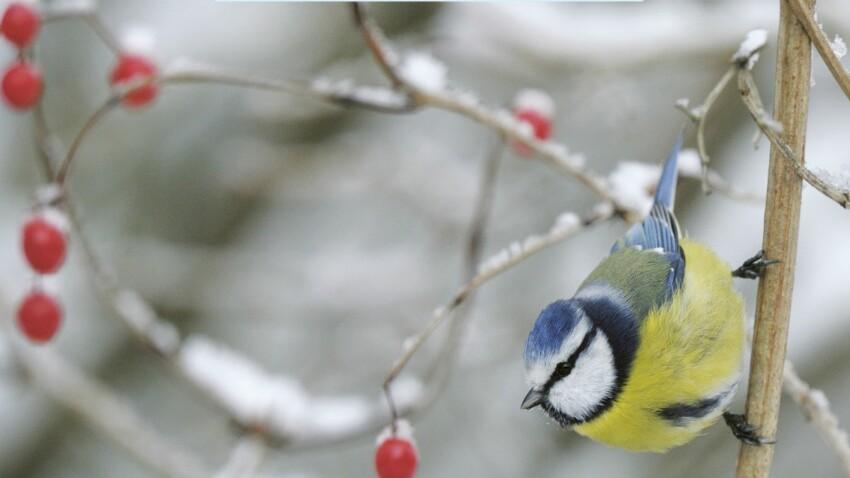 Les oiseaux, de vrais trésors de la nature